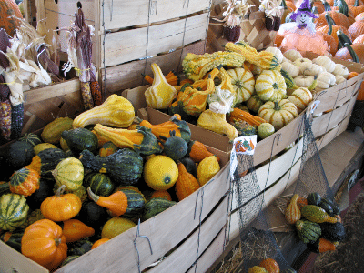 Gourds in crates