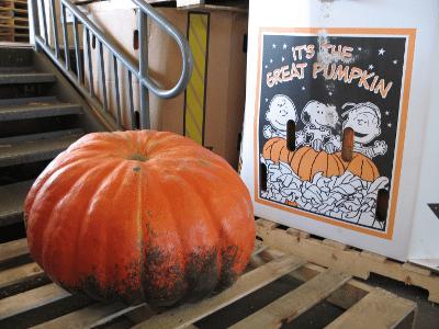 Large pumpkin on pallet