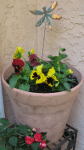 Pansies and Impatiens