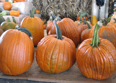 Pumpkins at State Farmers Market