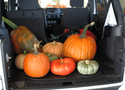 Pumpkins in back of Jeep