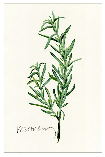 Rosemary artwork by tbg design