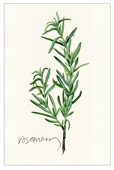 Rosemary artwork by tbg design
