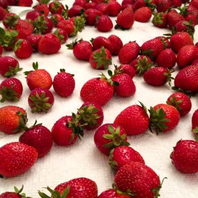 Fresh Strawberries | Magnolia Days