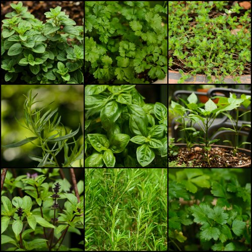 Plants from my garden collage