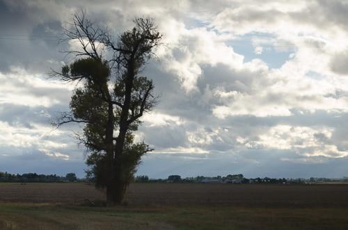 Idaho James Hoff Farm Field | Magnolia Days