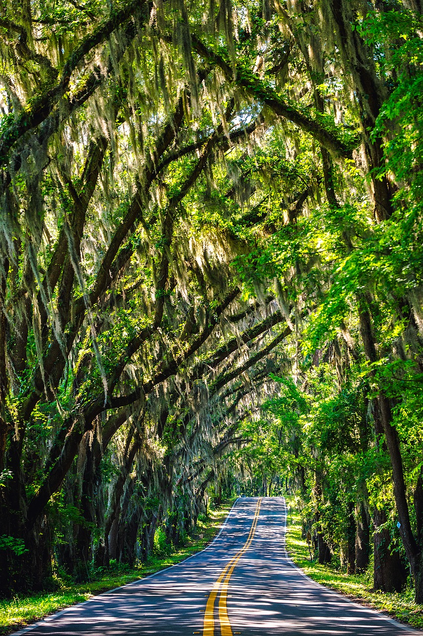 Yes, Florida is a Southern state, and here are 10 amazing photos to prove it. Take a look and see if you agree that Florida is truly Southern!