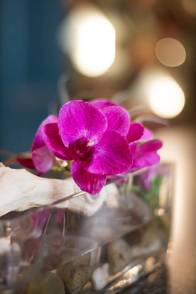 Purple Dendrobium orchid in a clear glass vase
