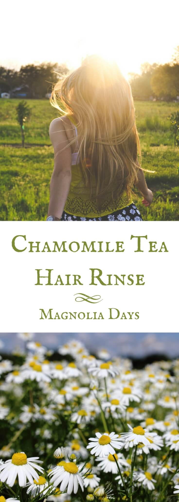 When you use chamomile tea for hair, it creates golden glints for a subtle sun-kissed look.  This recipe uses a triple soak and dry method for the maximum effect.