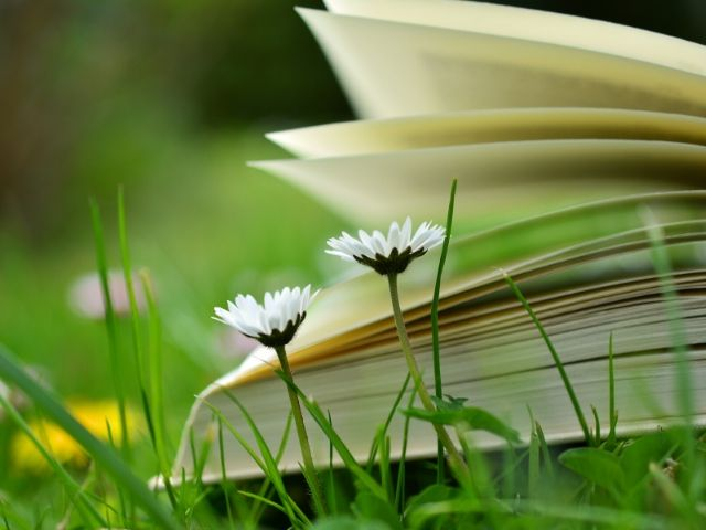 Open book in the grass with wildflowers