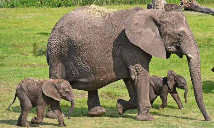 Elephants at ZooTampa at Lowry Park, Tampa Bay Attractions for Families