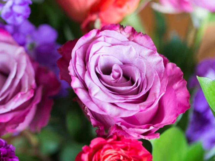 Purple and fuchsia roses in an UrbanStems bouquet